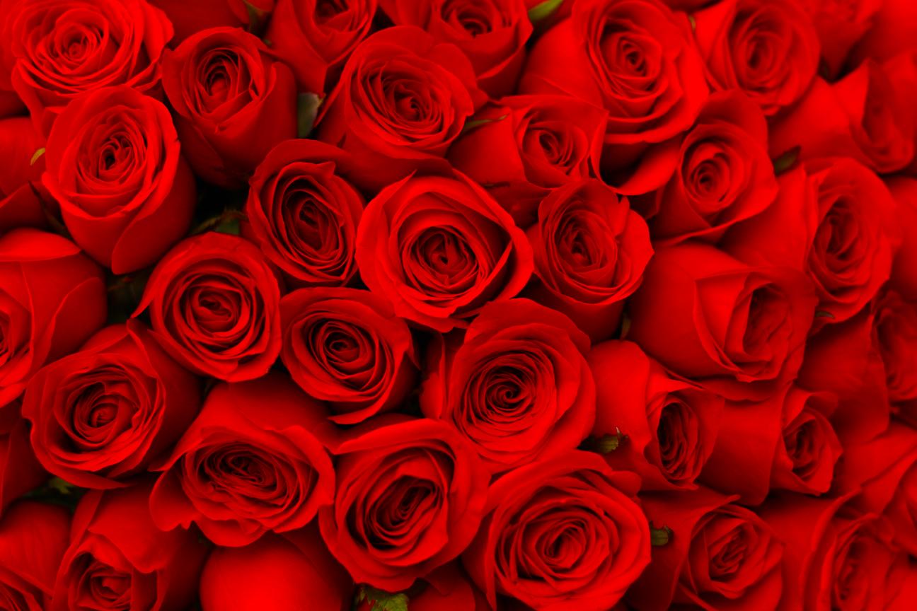 Horario de envío de flores en Nuevo León